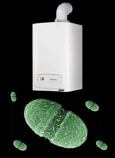 Bakterie v bojleru